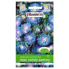 Aster chiński karłowy niebieski 1g PlantiCo