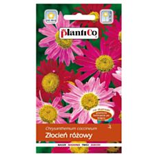 Złocień różowy 0,5g PlantiCO