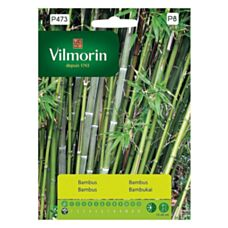 Bambus mrozoodporny Vilmorin