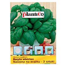 Bazylia właściwa nasiona na krążku 3 sztuki PlantiCo