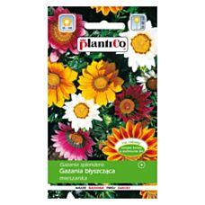 Gazania błyszcząca mix 1g PlantiCo