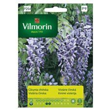 Glicinia chińska 10 sztuk Vilmorin