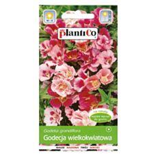 Godecja wielkokwiatowa 1g PlantiCo