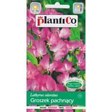 Groszek pachnący różowy 2g PlantiCo
