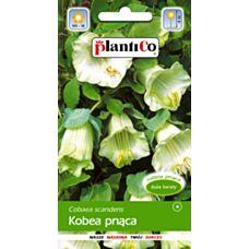 Kobea pnąca biała 0,5g PlantiCo