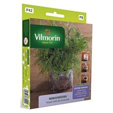 Miniogródek Koper niski do doniczek 2g Vilmorin