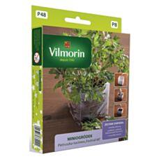 Miniogródek Pietruszka naciowa 5g Vilmorin
