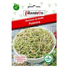 Nasiona na kiełki Pszenica 50g PlantiCo