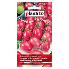 Pomidor gruntowy Malinowy Kapturek 0,2g PlantiCo