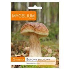 Grzybnia Borowik brzozowy 10g Mycelium