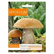 Grzybnia Koźlarza pomarańczowożółtego 10g Mycelium