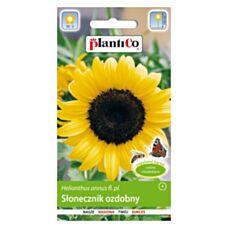 Słonecznik wysoki żółty pojedynczy 2g PlantiCo