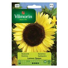 Słonecznik Lemon Queen Vilmorin
