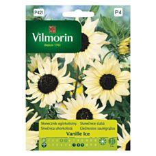 Słonecznik Ogórkolistny Vanille Ice Vilmorin