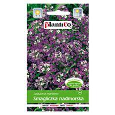 Smagliczka nadmorska amarantowo-fioletowa 0,5g PlantiCo