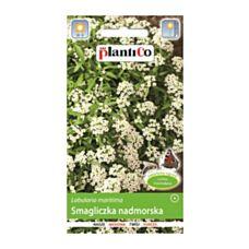 Smagliczka nadmorska biała 1g PlantiCo