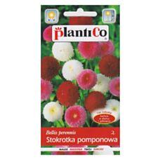 Stokrotka pomponowa MIX 0,1g PlantiCo
