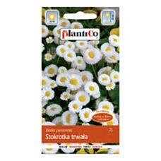 Stokrotka trwała biała 0,1g PlantiCo