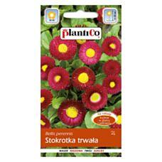 Stokrotka trwała czerwona 0,1g PlantiCo