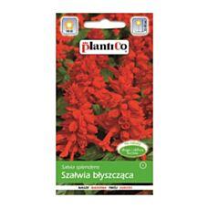 Szałwia błyszcząca czerwona Ramona 0,5g PlantiCo