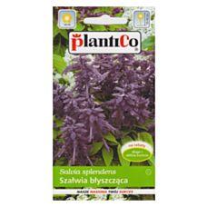 Szałwia błyszcząca fioletowa 0,5g PlantiCo