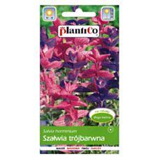 Szałwia trójbarwna 0,5g PlantiCo