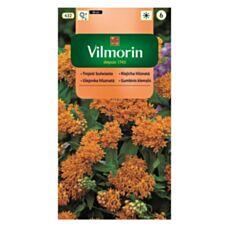 Trojeść bulwiasta 1g Vilmorin