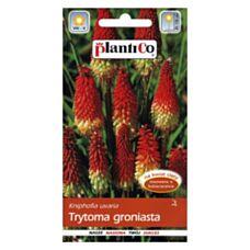 Trytoma groniasta 0,2g PlantiCo