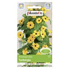 Tunbergia 0,5g PlantiCo