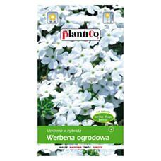 Werbena ogrodowa biała 0,5g PlantiCo
