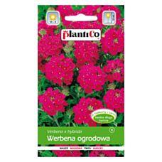 Werbena ogrodowa czerwona 0,5g PlantiCo