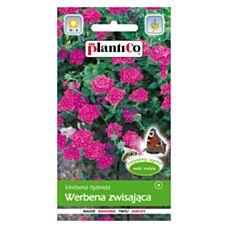 Werbena zwisająca 0,2g PlantiCo