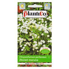 Złocień maruna biały 0,2g PlantiCo
