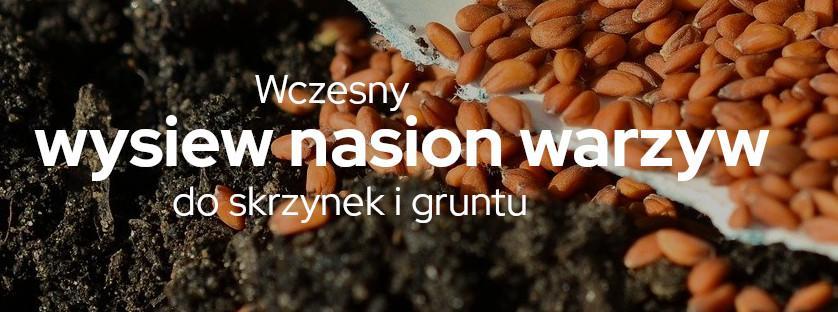 Wysiew nasion