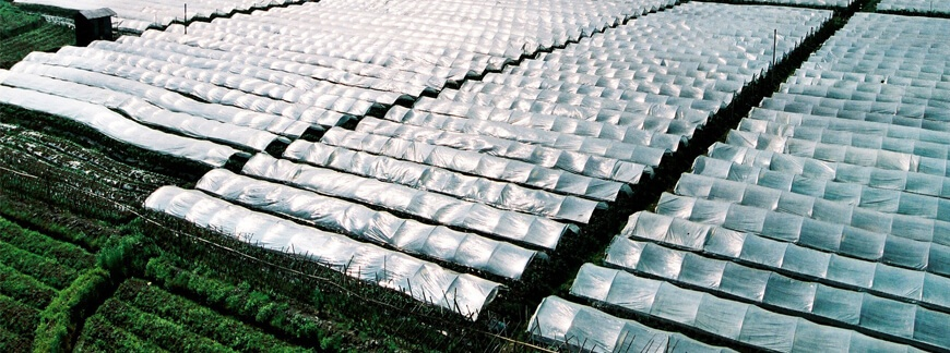 Jak przygotować inspekt ogrodowy i tunel foliowy? Poradnik dla ogrodników