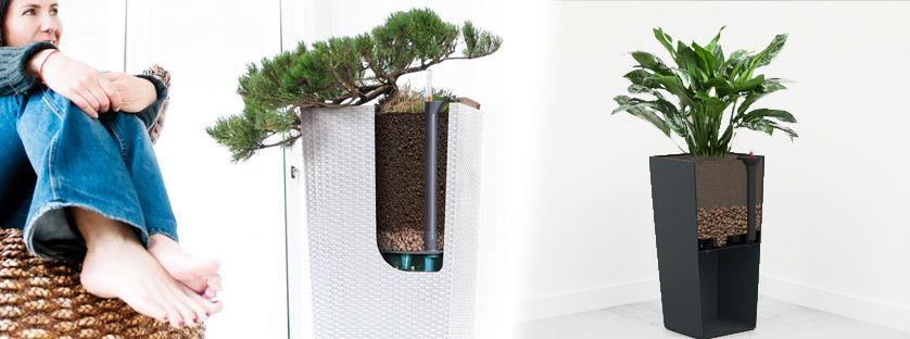 Jak nawadniać kwiaty podczas nieobecności? Systemy nawadniające do doniczek i inne sposoby na podlewanie roślin