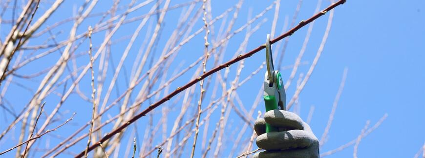 Wiosenne przycinanie drzew owocowych - kiedy i jak to zrobić?