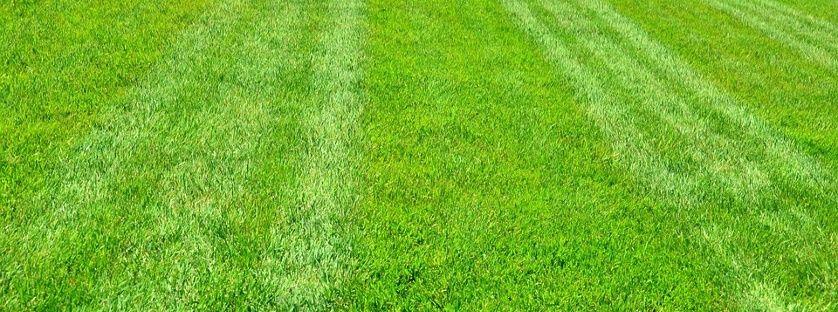 Regeneracja trawnika – kiedy i jak ją wykonać ?