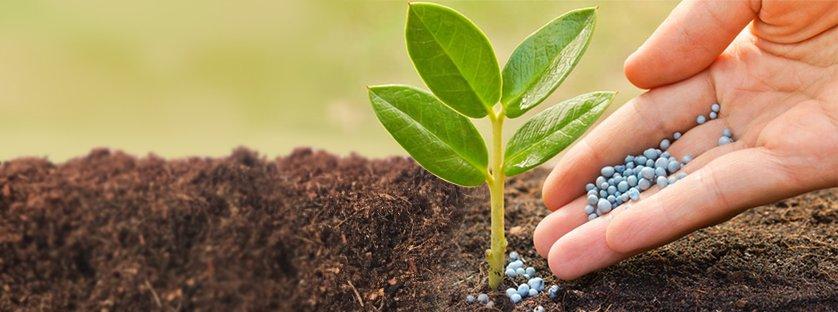 Skuteczne nawozy dostosowane do potrzeb Twojego ogrodu
