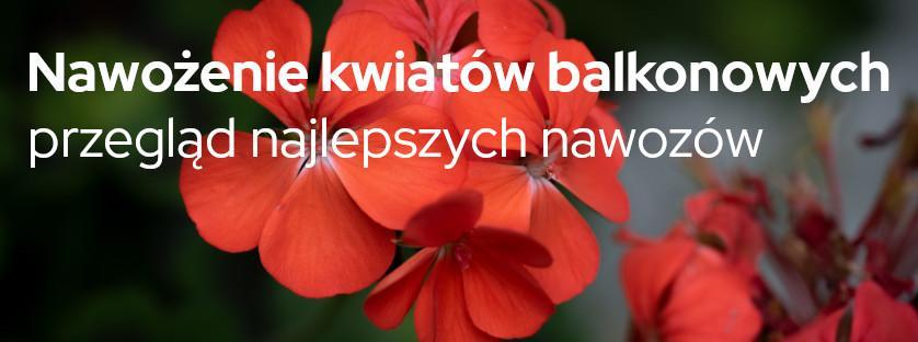 Nawożenie kwiatów balkonowych - przegląd najlepszych nawozów