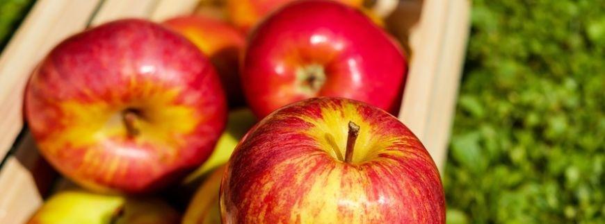 Jesienny zbiór owoców