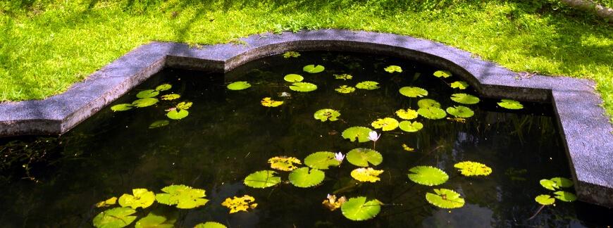Jak pielęgnować oczko wodne w ogrodzie?