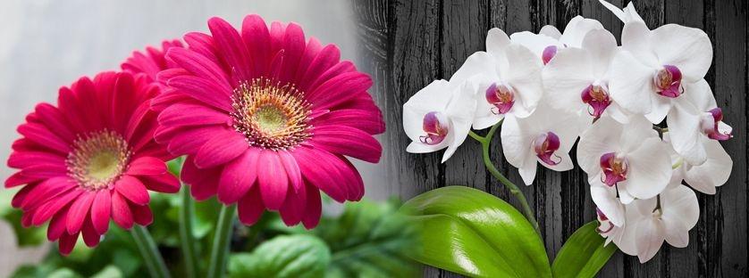 Najzdrowsze rośliny doniczkowe