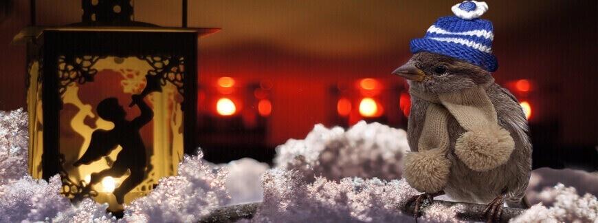 Ptaki zimujące w Polsce. Które ptaki zostają na zimę?