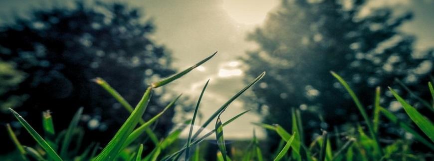 Kiedy wapnować trawnik?