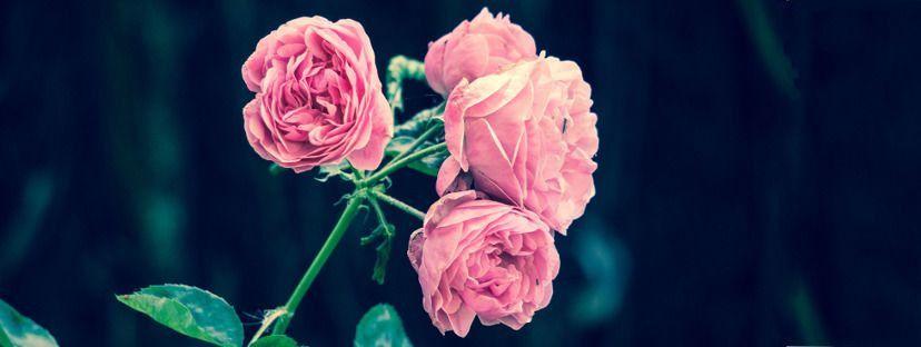 Sadzenie róż wiosną. Jak i kiedy sadzić róże w ogrodzie?