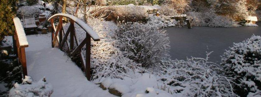 Agrowłóknina zimowa skuteczna ochrona przed mrozem!