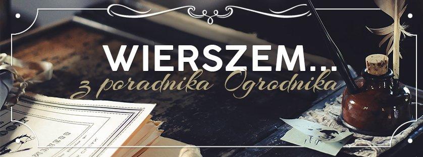 Z poradnika Ogrodnika…Zakładanie trawnika