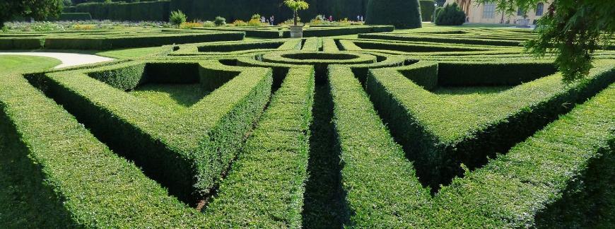 Zadbany żywopłot gwarancją pięknego ogrodu. Cięcie i pielęgnacja żywopłotu.