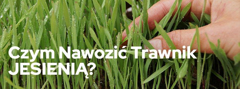 Czym nawozić trawnik jesienią?
